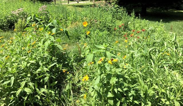 hst pollinator garden