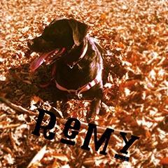 Noah's dog Remy