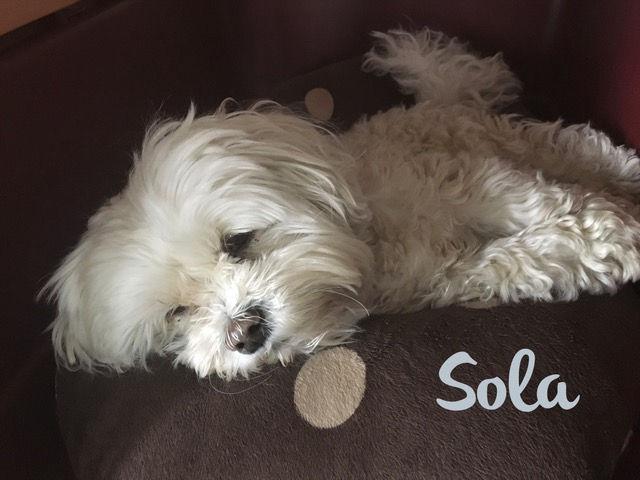 Brian's dog Sola