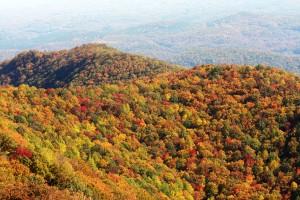 Fall Colors in Western North Carolina