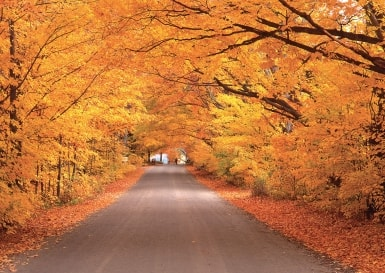 The road through the autumn forest