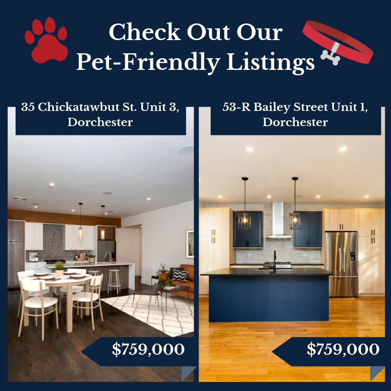Dorchester MA Pet Friendly Condos
