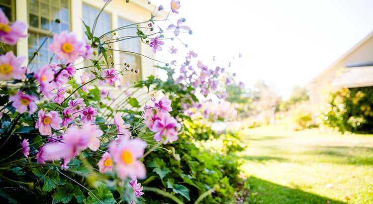 Spring Flowers by House