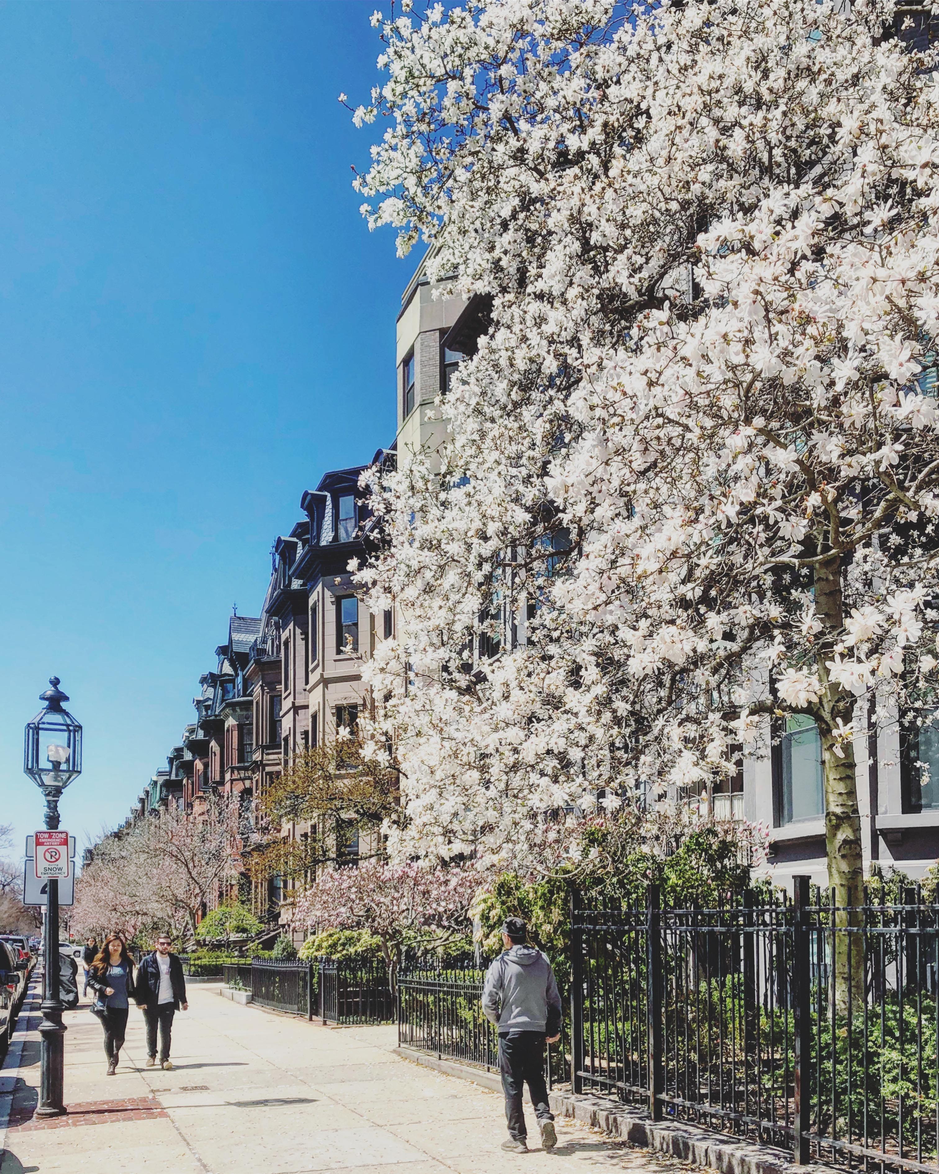 Boston Back Bay in Spring