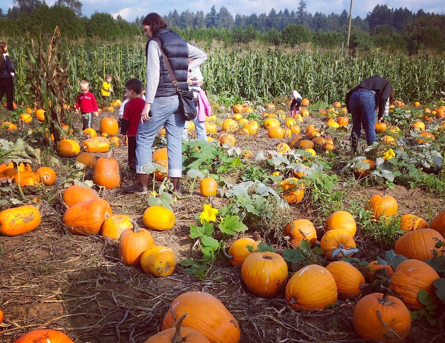 Harvest Festival in VT