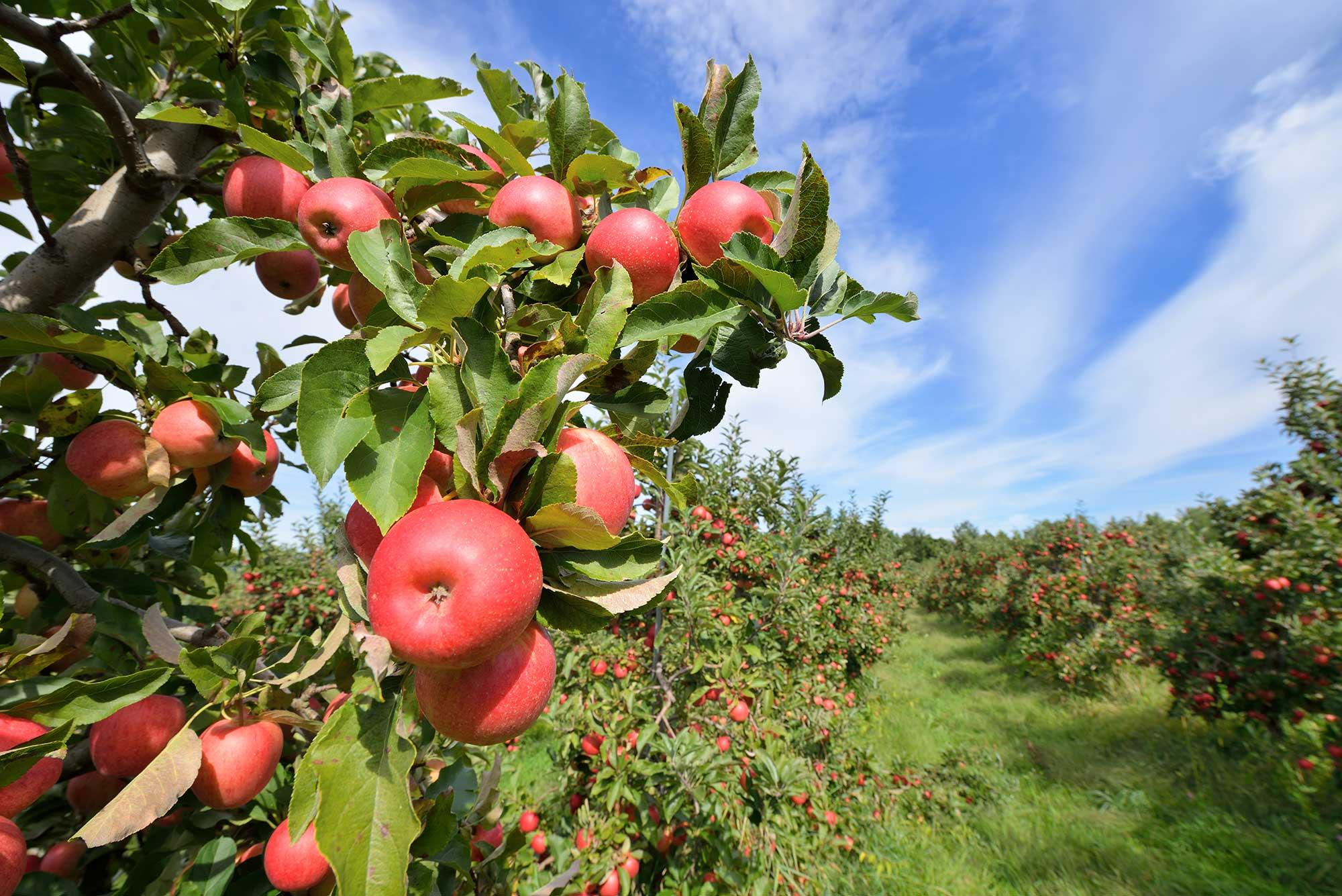 Scott Farm Orchard in VT