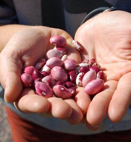 Seedlings in Hands