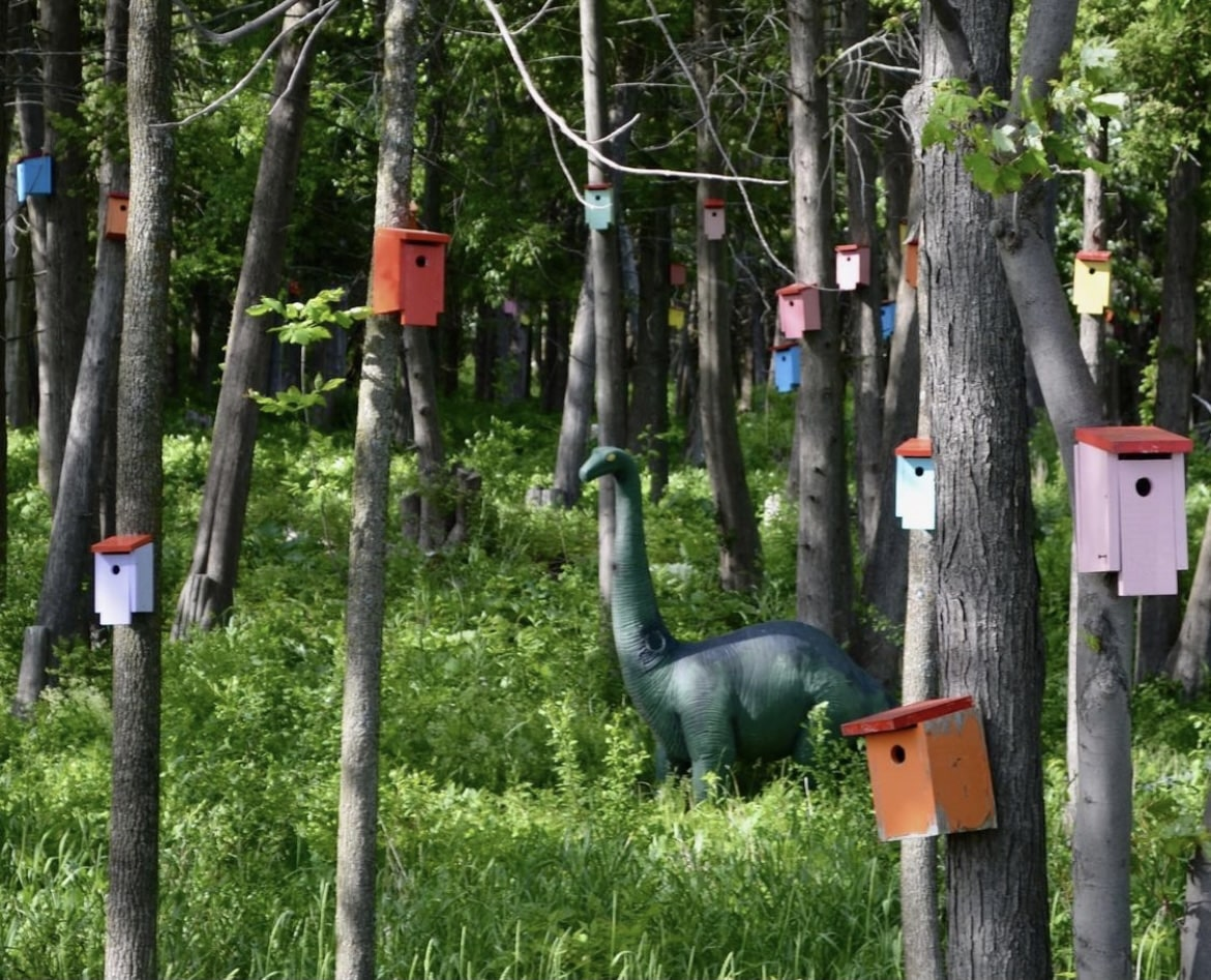 Colorful Bird House Forest in South Hero, Vermont