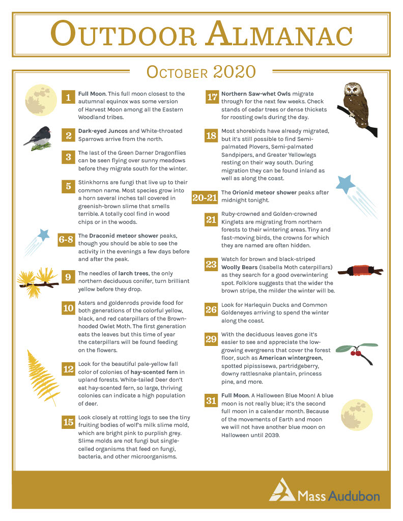 Outdoor Almanac October 2020 Mass Audubon