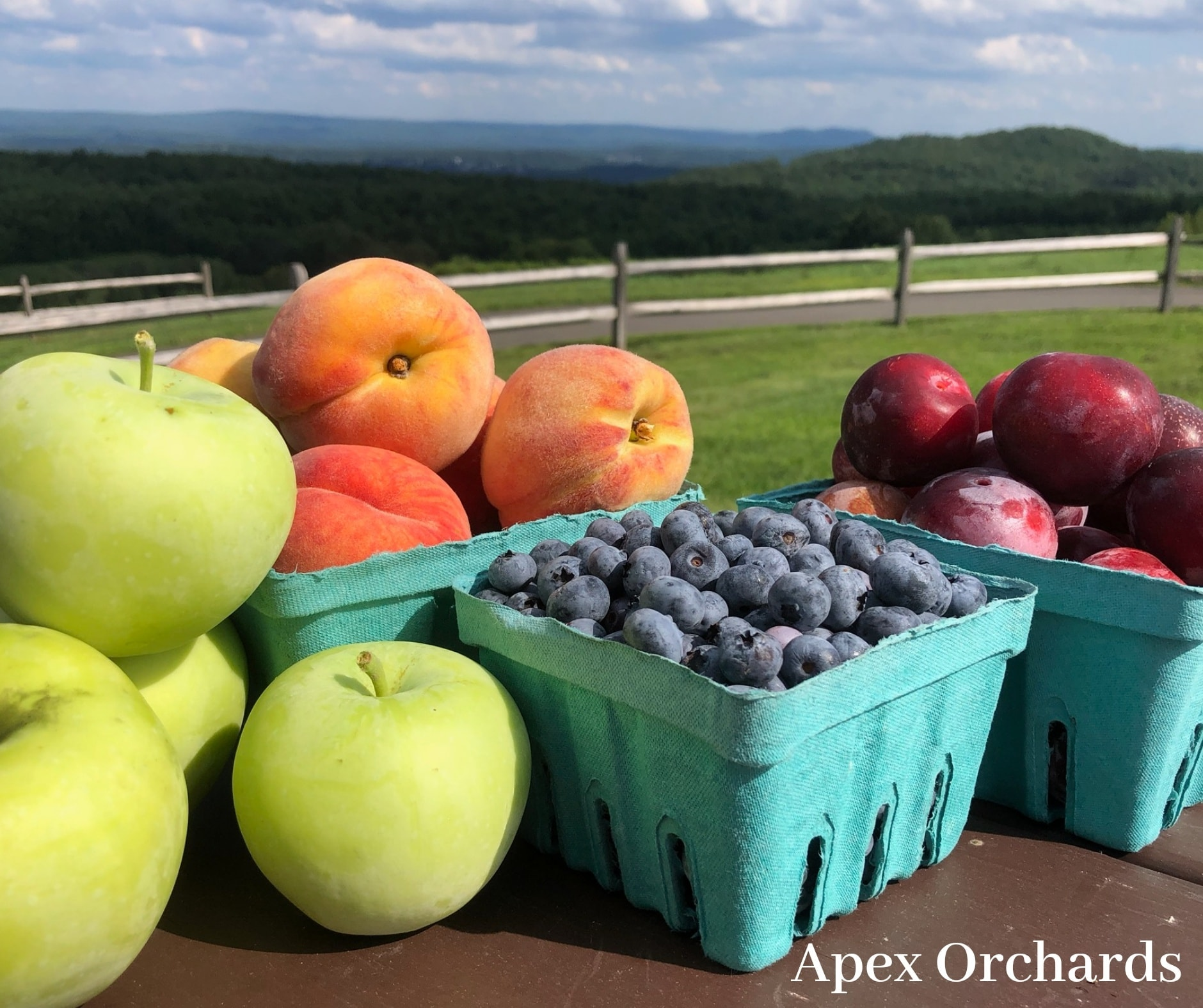 Apex Orchards Fruit Pick Your Own Massachusetts