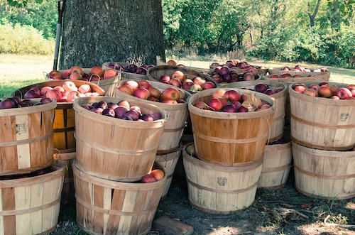 Asheville Area Apple Orchards