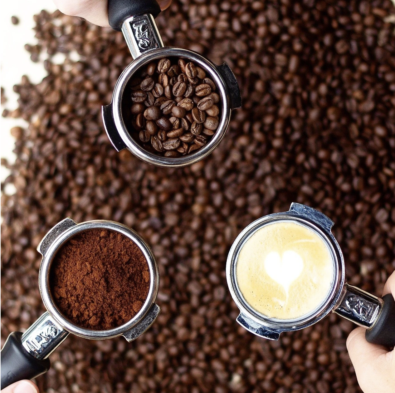 Coffee 101 with LampLighter Brewery