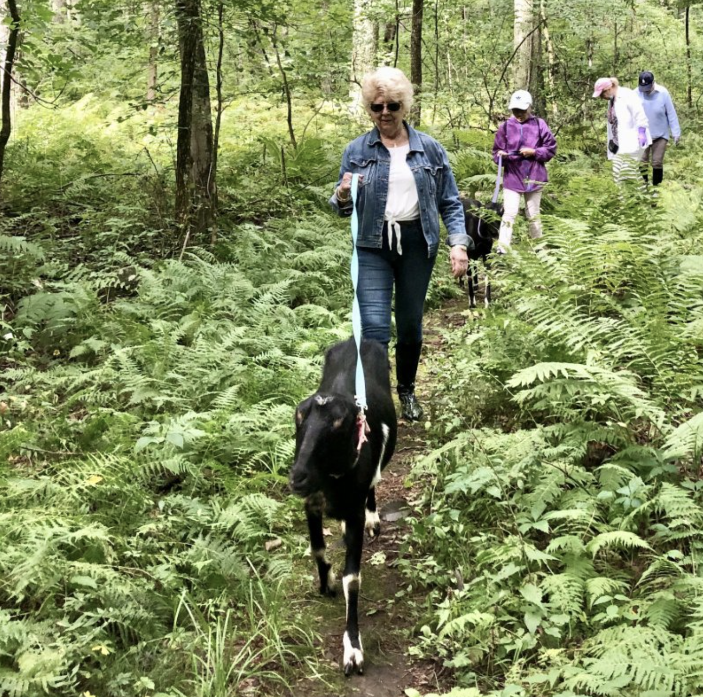 Hiking with Goats at Chestnut Hill Farm
