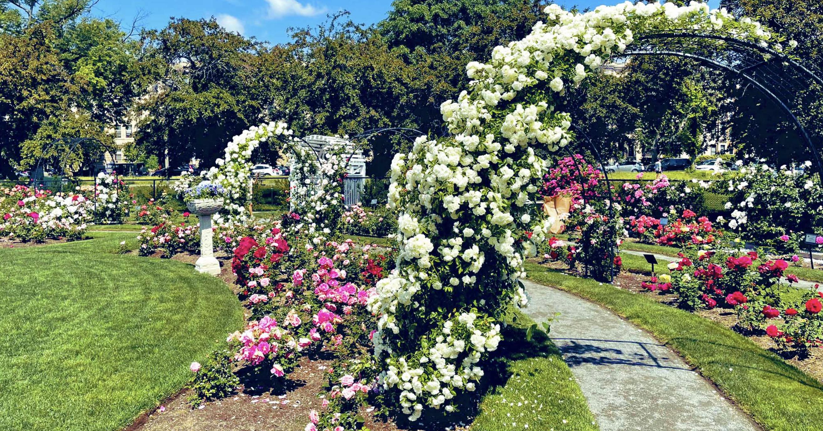 Kelleher Rose Garden, Boston