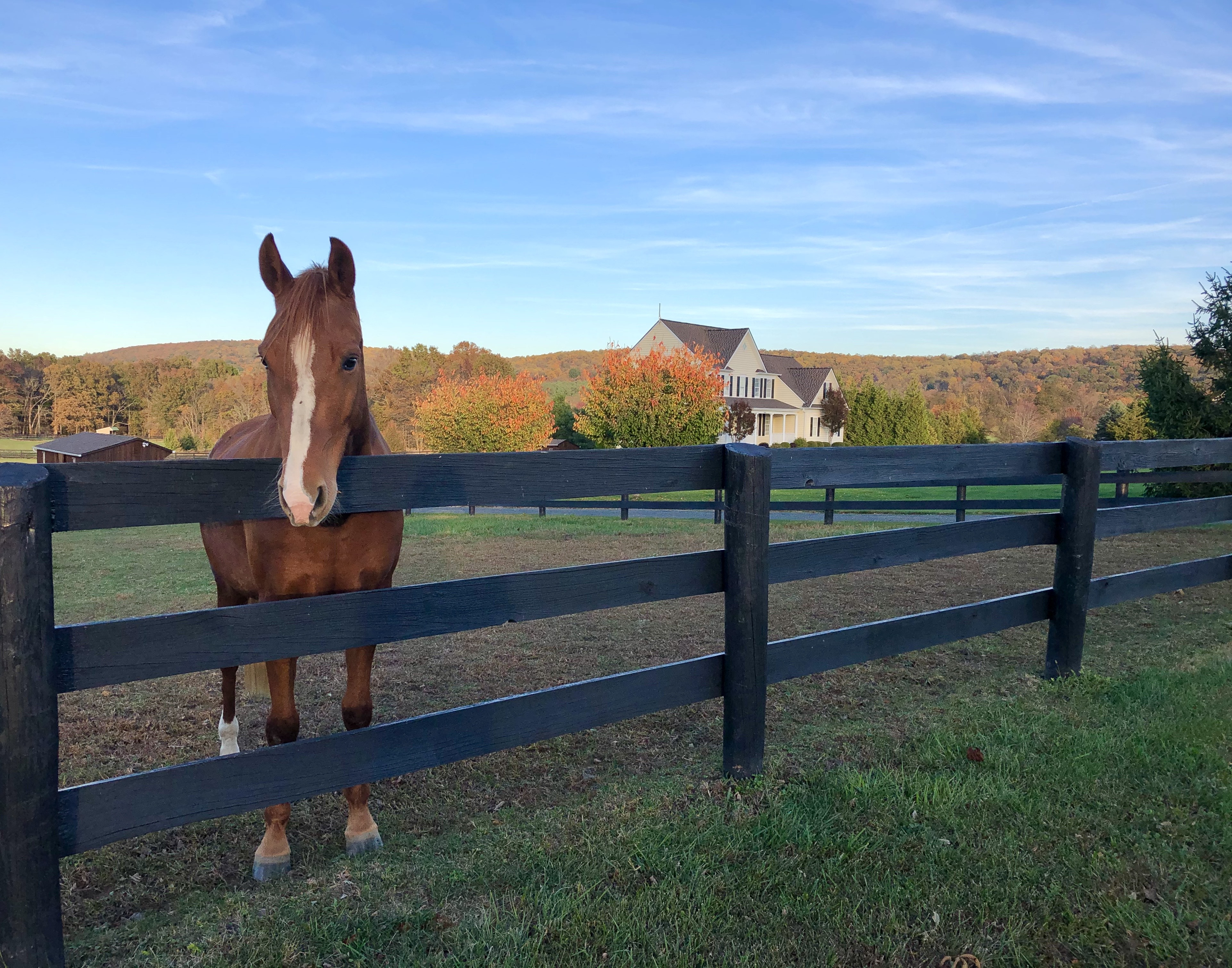 Horse Property for Sale in Purcellville