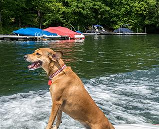 Pet Friendly Vacation Rentals | Deep creek Lake