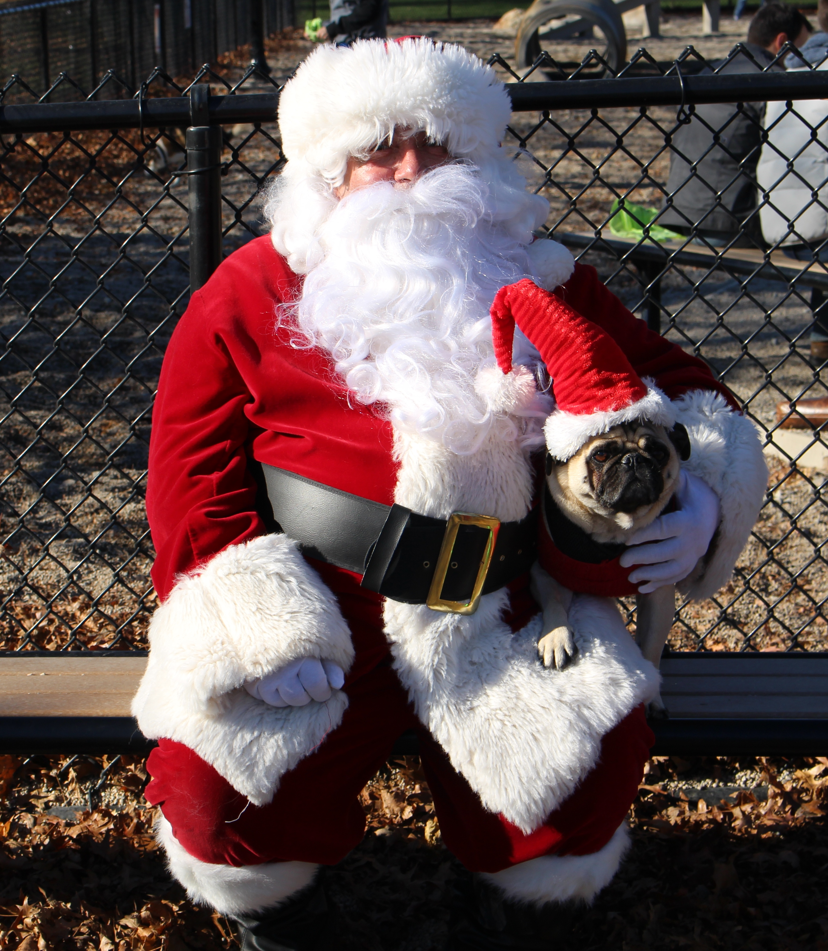 2nd Annual Santa Paws Event at Thorndike Field Dog Park