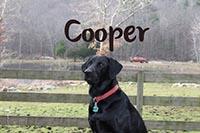 Jeanne's dog Cooper