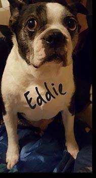 Paul's dog Eddie