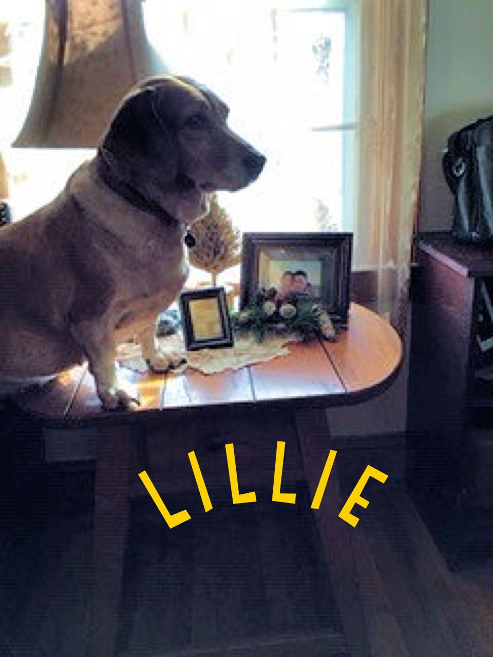 Lillie the dog