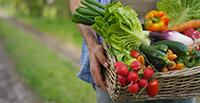 Farmers Markets in CT