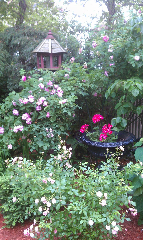 Charlestown Garden, Charlestown Garden Tour, Boston Garden, Boston Flowers