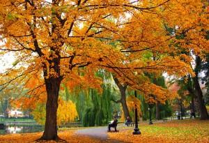 Fall Season, Boston Fall, Massachusetts Fall, Boston Real Estate, Massachusetts Real Estate