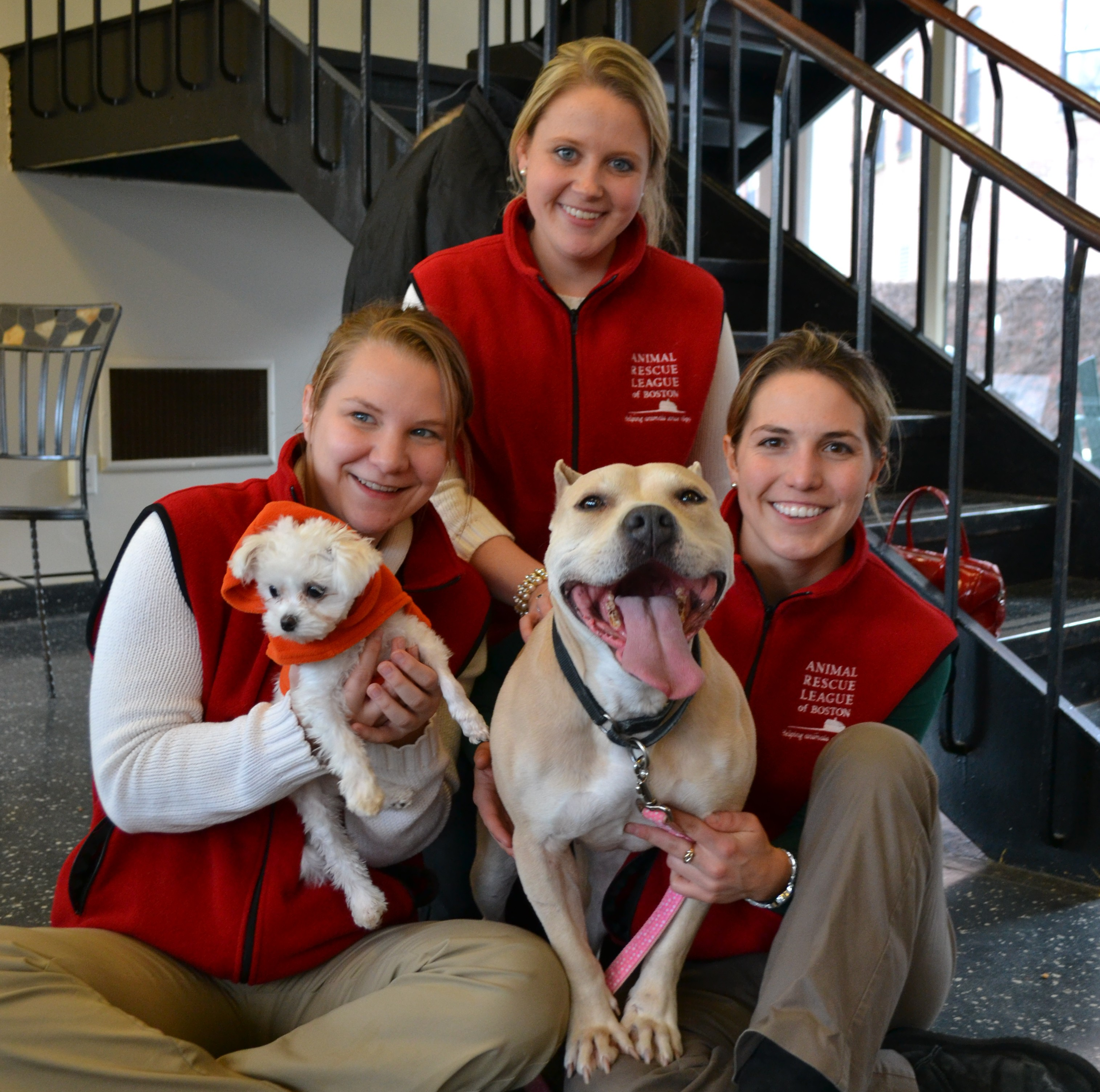 Animal Rescue League of Boston, Gibson Sotheby's International Realty, Animal Rescue League, Boston Charities