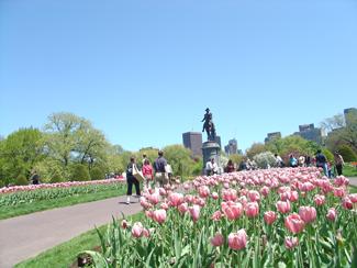 Spring in Boston's Back Bay