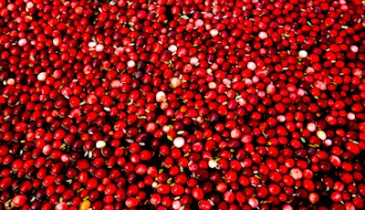 x400-cranberries.jpg.pagespeed.ic.0EgF2Gn_lS