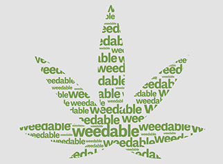 cannabisseoexpert3240