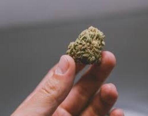 buyhighqualitycannabisproductsonline12931
