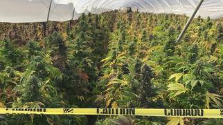 castillhasissueswithcannabisblackmarket7195
