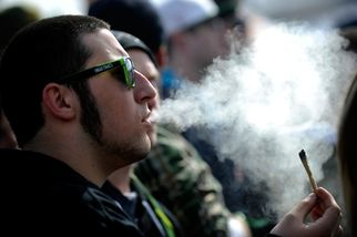 cannabiscupleavescoloradoforgreenerlandsin3889