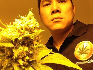 cannabiscoincultivatorsgrowingmedsforpatients1266