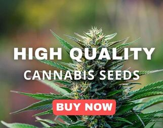 cheapestweedseeds8092