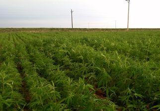 howtogrowmarijuanaoutdoorsfactorsforoptimal3760