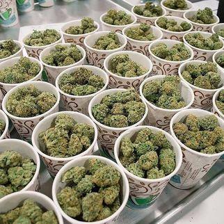 medicalmarijuanaavailable100safeanddiscreet7021