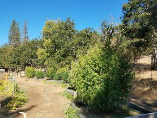 oregontrees7369