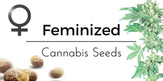 seedsamplepacks8037