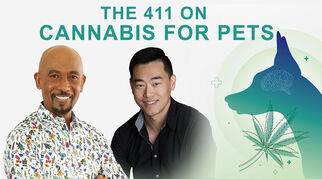 the411oncannabisforpetstimshudvm8012