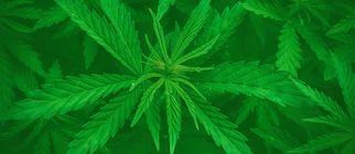 thebusinessofcannabis7010