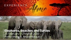 Africa 2019: Elephants, Beaches and Turtles Experience