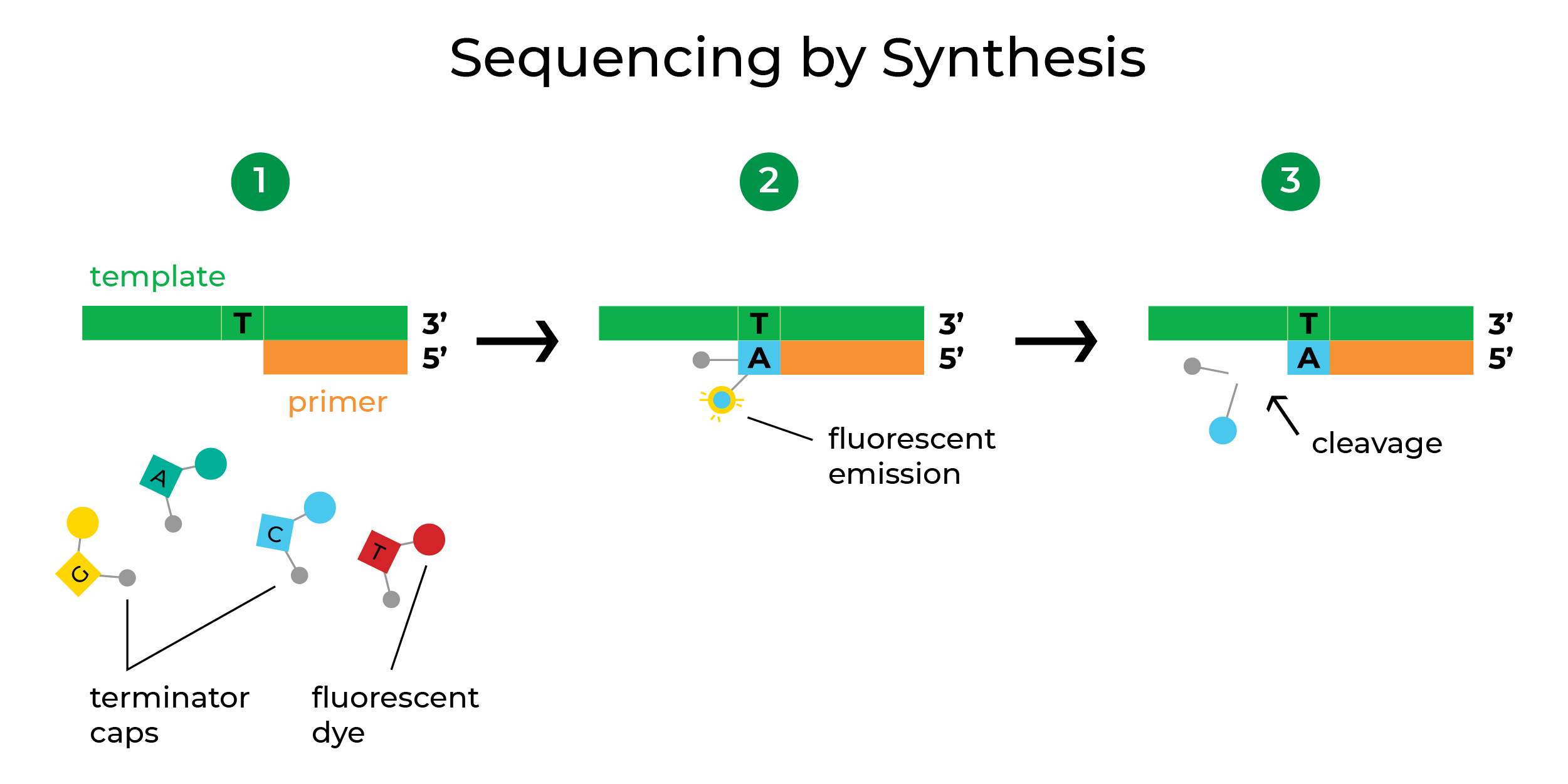 Figure showing ZymoSEQ RiboFree