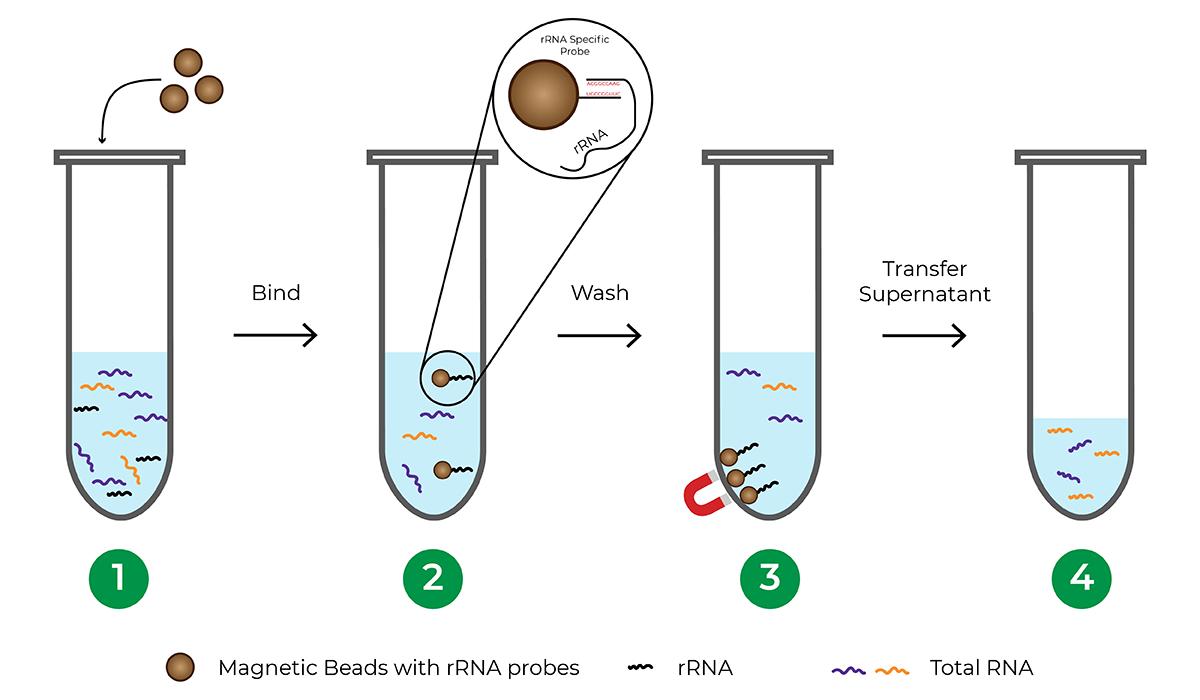 Figure showing TreSEQ rRNA