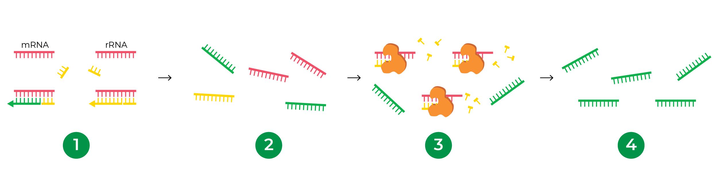 Figure showing ZymoSEQ RiboFree