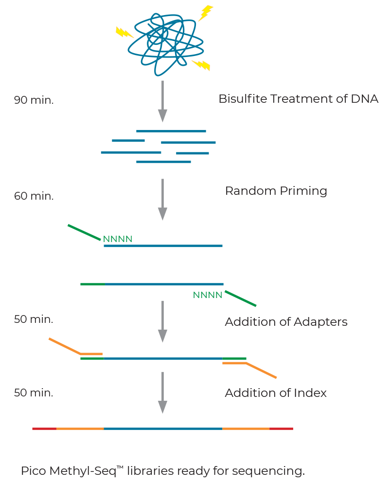 Figure showing the workflow of Pico Mthyl-Seq Library Prep Kit for WGBS