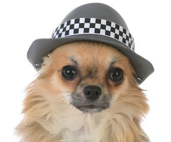 Why Is She Having Hallucinations? The Mystery of The Dog in A Fedora