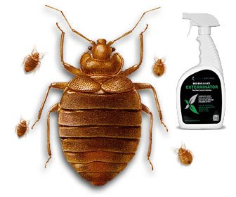 View the product Bed Bug and Flea Spray by Hopkins Medical