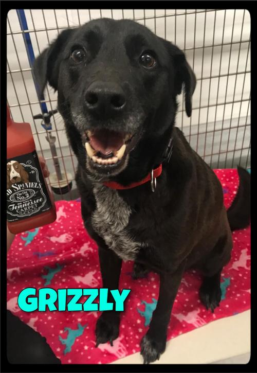 Grizzly - 2002028 / 2020
